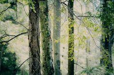 Leafy greenness.