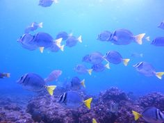 Scuba diving in the Galapagos Islands #OnlyInSouthAmerica
