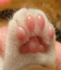Fuzzy cat paw