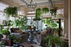plant species conservatory ideas ferns armchair window blinds