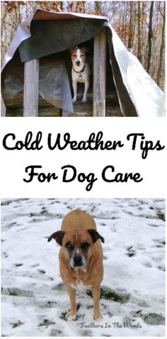 Taking care of your dog in cold weather. 12 must know winter tips for dogs to help them deal with winter. Puppy Care, Dog Care, Winter Hacks, Winter Tips, Winter Hiking, Puppy Training Guide, Training Tips, Cold Weather Dogs, Outside Dogs