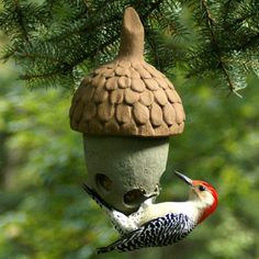 SUET FEEDER - ATTRACTS: Red Bellied Woodpeckers.  Shown above, Red Bellied Woodpecker.