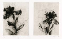 Jake Muirhead, 'Middlebury Irises' Two plates. etching, drypoint and roulette. Botanical Art, Botanical Illustration, Illustration Art, Illustrations, Grabar Metal, Intaglio Printmaking, Drypoint Etching, Graphic Prints, Art Prints