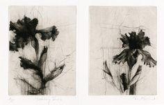 "Jake Muirhead ""The Middlebury Irises"" Drypoint"