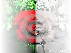 rose-background-cut-two-parts-first-one-colorful-other-one-white-image-useful-cards-banner-stationery-wallpaper-blog-posts-brochure Rose Background, White Image, Colorful Backgrounds, Posts, Abstract, Wallpaper, Artwork, Blog