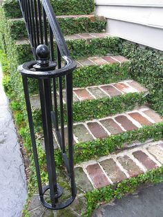 Ficus pumila (creeping fig / ticky creeper) is excellent along steps and walls. This site has lots of stuff I love about Virginia homes!  Great pantry in this set of pictures too!