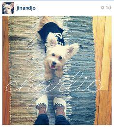 charlie-#dog