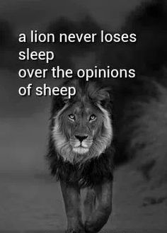 Lions don't lose sleep over the opinions of sheep