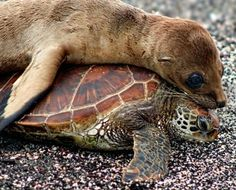 Sea lion & Sea turtle