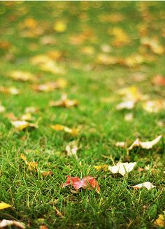 Herfst, herfst