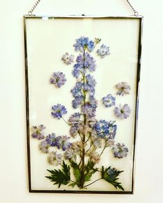 """When I pressed this delphinium flower I knew I would have to use it for something special. I can't believe I found the perfect frame for it! 😍😍😍 I just finished this 12"""" x 20"""" beauty and would love for it to go to a good home!#delphinium #delphiniums #pressedflowers #pressedflowerart #etsy#pressedflowerart #pressedflowerartist #forsale #etsyart #driedflowers #driedflowerartist Delphinium Flowers, Delphiniums, Drying Flowers, Pressed Flower Art, How To Preserve Flowers, More Fun, Vintage World Maps, It Is Finished, Photo And Video"""
