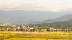 Title  Japanese Autumnal Countryside With Yellow Rice Fields   Artist  David Hill   Medium  Photograph - Photograph