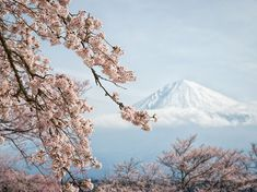 Fuji Blossoms Photograph by Yuga Kurita, National Geographic