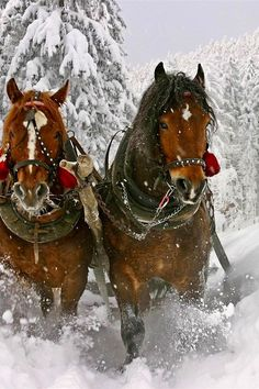 Horses in the snow <3