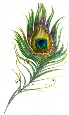 Beautiful iridescent peacock feather illustration by Amy Holliday Peacock Feather Tattoo, Feather Art, Feather Design, Peacock Feathers, Feather Drawing, Feather Sketch, Drawing Art, Peacock Decor, Peacock Colors