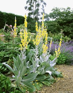 10 easy plants that resist water shortage - Relaxation Garden shed . Garden Landscaping, Dry Garden, Flower Beds, English Landscape Garden, Garden Flower Beds, Sloped Garden, Winter Garden, Plants, Landscaping Plants