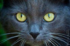 Cat - surprised