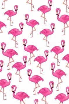 обои во фламинго