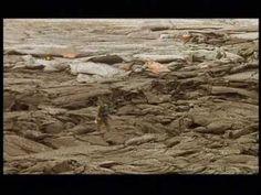 planeta Terra - um planeta fascinante - YouTube