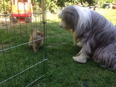 Talking bunny business something to do with an escape plan! Rosie and brambles