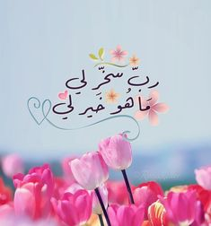 ربّ سخر لي ماهو خيرٌ لي Religion Quotes, Islam Religion, Islamic Images, Islamic Pictures, Duaa Islam, Islam Quran, Arabic Quotes, Islamic Quotes, Allah
