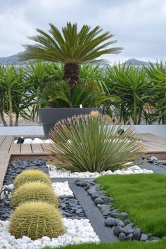 Drought tolerant landscaping gardening. mix of dark and white rocks with wood