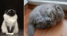 Il gatto è un animale che proprio come il cane, se non di più, ha affiancato da sempre la vita dell'uomo. Vengono in mente i gatti egizi venerati e adorati come dei, ritrovati disegnati…