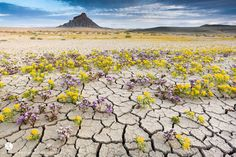 """The Badlands region in the America West is known for its arid and unforgiving vegetation. The harsh environment is lifeless, but every so often it sprouts a delicate beauty of wildflowers. Photographer Guy Tal was there to capture this rare sight. He says:  """"On rare years wildflowers burst into a stunning display of color, transforming the desert into a veritable garden for just few precious days."""""""