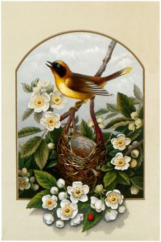 Pretty Yellow Bird with Nest Image! - The Graphics Fairy