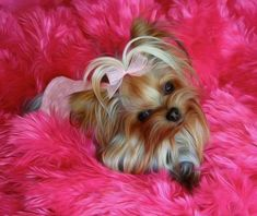 Amazing Yorkshire Terrier Haircut Male Yorkshire Terrier Puppy Teddy Bears Source by farrahdolan The post Yorkshire Terrier Puppy Teddy Bears appeared first on Coulson Puppies. Tiny Puppies, Cute Dogs And Puppies, Pet Dogs, Pets, Yorkies, Yorkie Puppy, Yorshire Terrier, Silky Terrier, Cairn Terriers