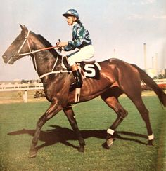 LORD NELSON (NZ) B g 1967, My Pal (Ire) - United Princess. Kevin Langby up. Unfashionably bred but a horse who could hold his own, he won the 1973 QTC Doomben Cup, Stradbroke Handicap and the AJC Epsom Handicap.