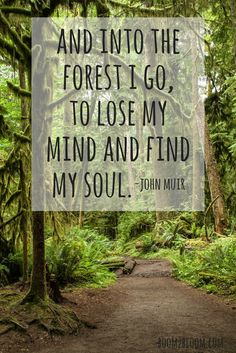 is My Sanctuary: Quotes to Inspire & Heal a forest with the quote and into the forest I go, to lose my mind and find my soul by John Muir.a forest with the quote and into the forest I go, to lose my mind and find my soul by John Muir. Soul Quotes, Nature Quotes, Life Quotes, Quotes About Nature, Quotes About Outdoors, Art Prints Quotes, Art Quotes, Inspirational Quotes, Quote Art