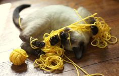 .siamese cat with yellow yarn.