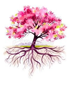 Blooming Family Tree with Roots Royalty Free Stock Photo