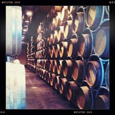 Barrels of Sassicaia.  One of my favorite Super Tuscans.