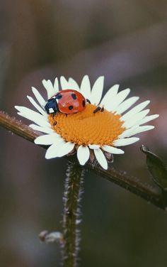 #natur #flower #summer #norway