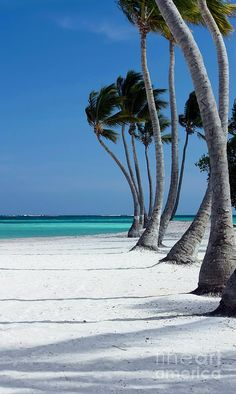 Punta Cana, Dominican Republic- hoping for vacation there this year Punta Cana, Dream Vacations, Vacation Spots, Honeymoon Spots, The Places Youll Go, Places To See, Tropical Beaches, Beach Pictures, Beautiful Beaches