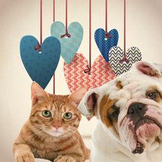 Amor perros y gatos   http://todoparatumascota.com.mx/