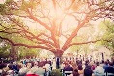 wedding ceremony at oak tree manor- spring, texas. lighting and oak tree perfection.
