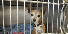CALIFORNIA THROWING AWAY PETS  Please Please Sign - what's going on there is unconscionable!!