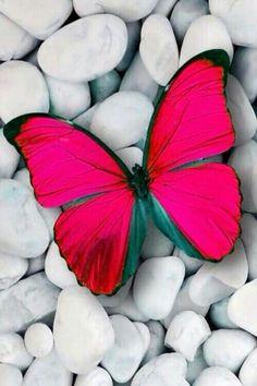 97 besten BuTTerFliEs WeRe MeAnT tO Fly Free.. Bilder auf Pinterest ...