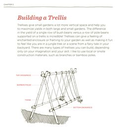 Learn how to build a trellis! Free project PDF download
