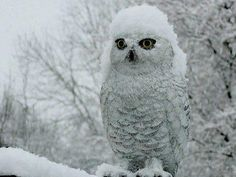 Snow on snow.