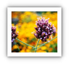 flower card Flower Cards, Photographs, Flowers, Floral, Fotografie, Royal Icing Flowers, Florals, Flower, Blossoms