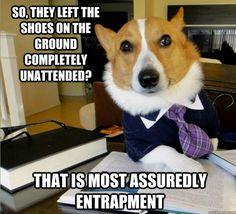 Lawyer Dog!