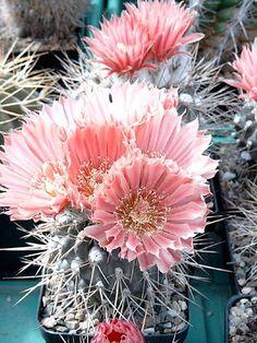 Desert Beauty| Cacti|Boho inspo|