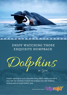 Explore the Arabian Sea with dolphins twirling here at Grand Island, Goa. Adventure Activities, Travel Activities, Goa Travel, Travel Destinations, Grand Island, Arabian Sea, Best Boats, Boat Tours, Dolphins