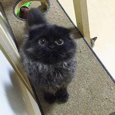 宝石のような瞳を持つ猫が成長すると…