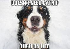 looks like that dog is going hi hi hi!