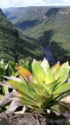 Guyana 2016 - TheBeastAndBeauty Tours, Island, Mountains, Nature, Plants, Travel, Naturaleza, Viajes, Islands